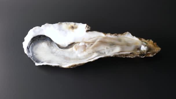 Riesige rohe frische Auster auf halber Schale auf schwarzem Hintergrund