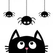 Fényképek Fekete macska keresi fel pókok