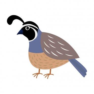 Quail bird. Cute cartoon character.