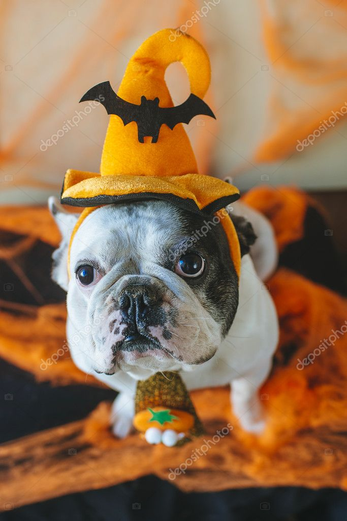 Hund Mit Halloween Kostum Stockfoto C Kiko Jimenez 125019862