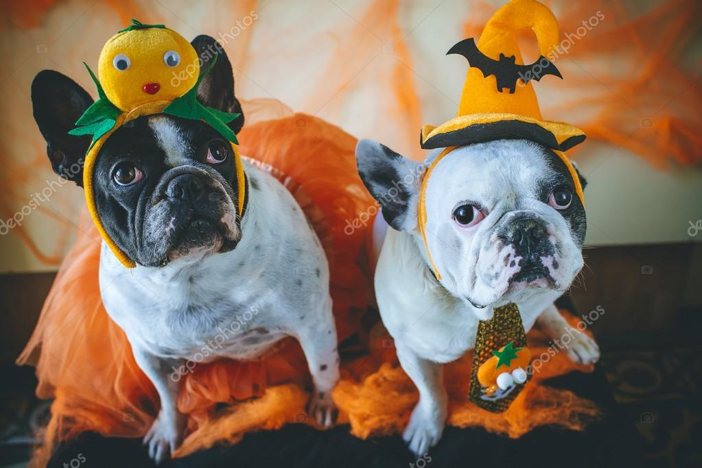 dog with halloween costume stock photo