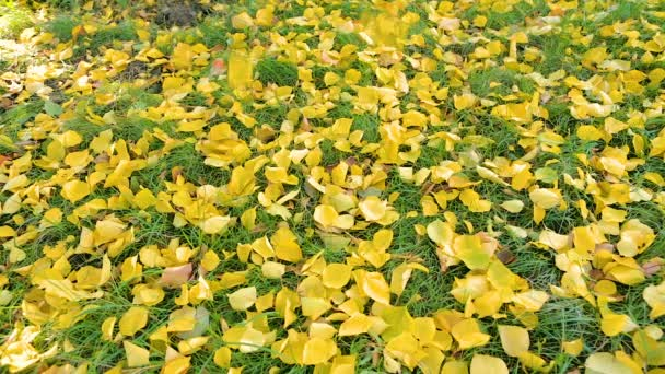 Yellow Leaves Falling on Green Lawn