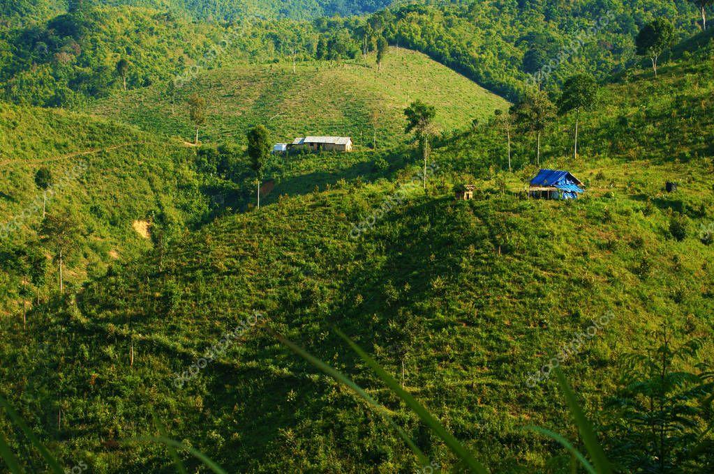 deforestation for agriculture, climate change