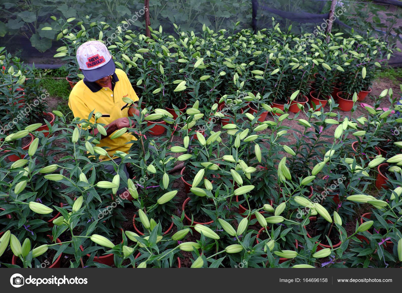 Asiatische Bauern Arbeiten Auf Gartenlilien Redaktionelles