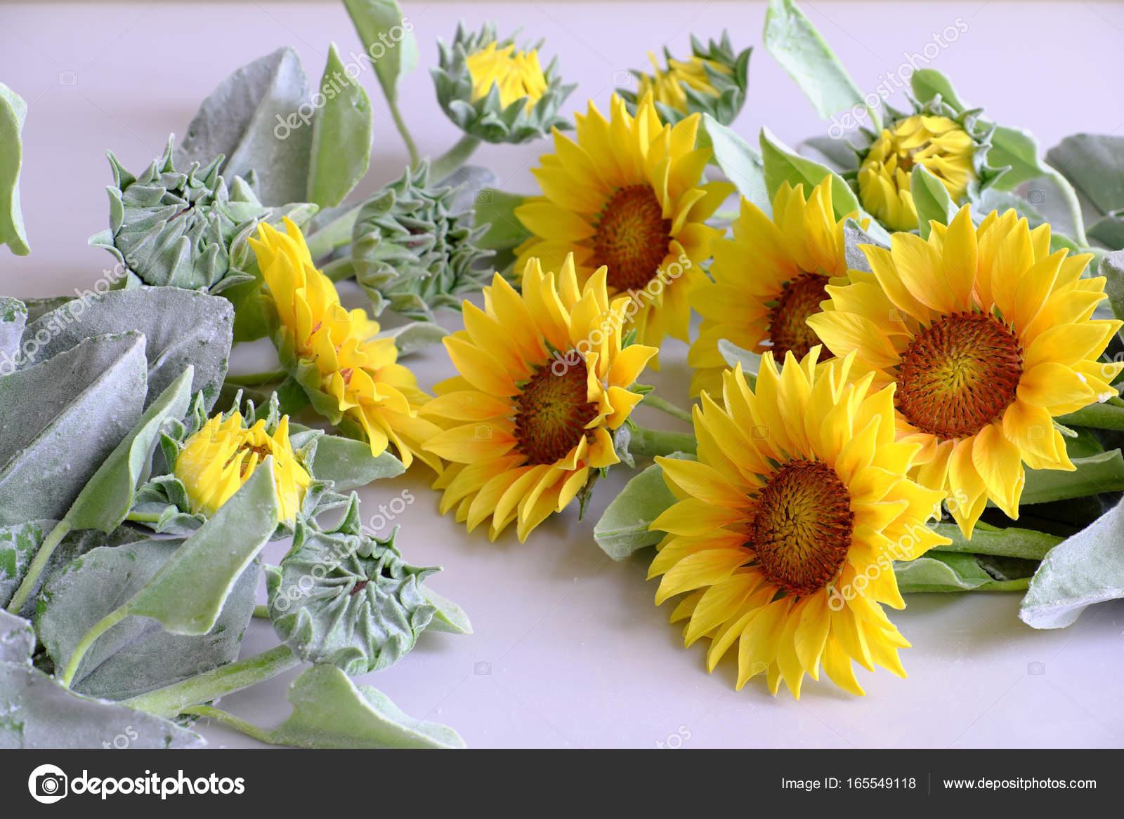 bouquet de fleurs, tournesol d'argile — photographie xuanhuongho