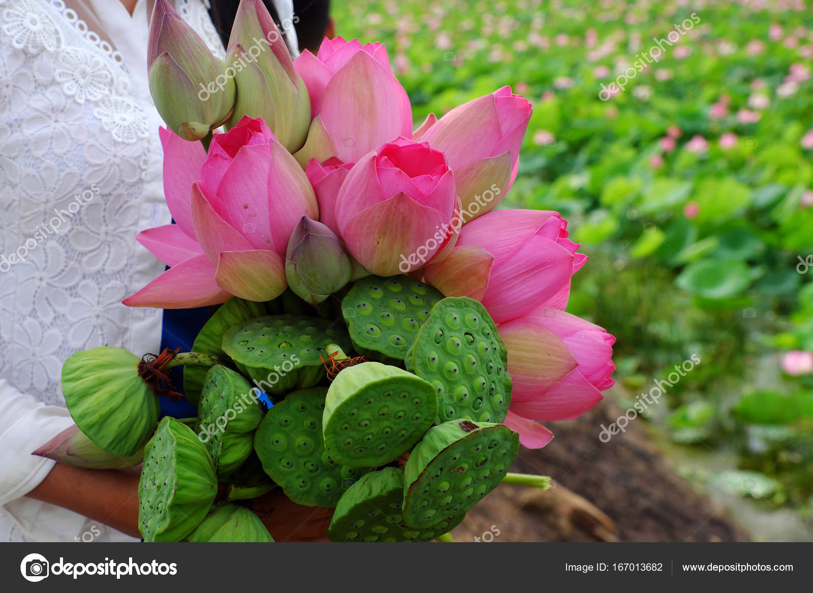 Lotus Flower Bouquet Stock Photo Xuanhuongho 167013682
