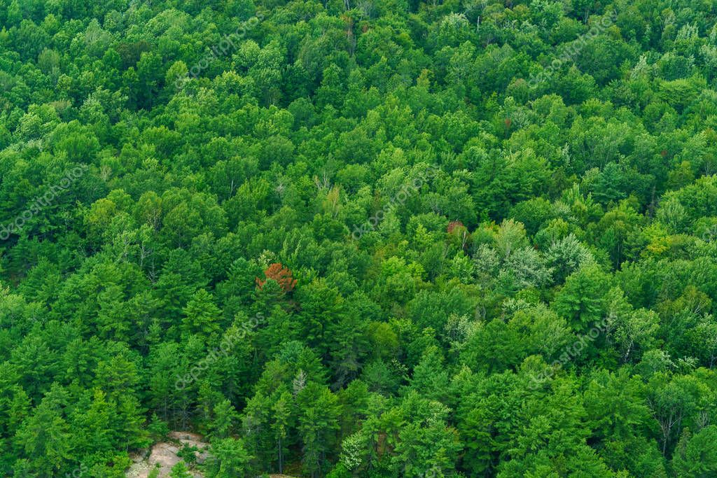 Overhead and elevated view of forest
