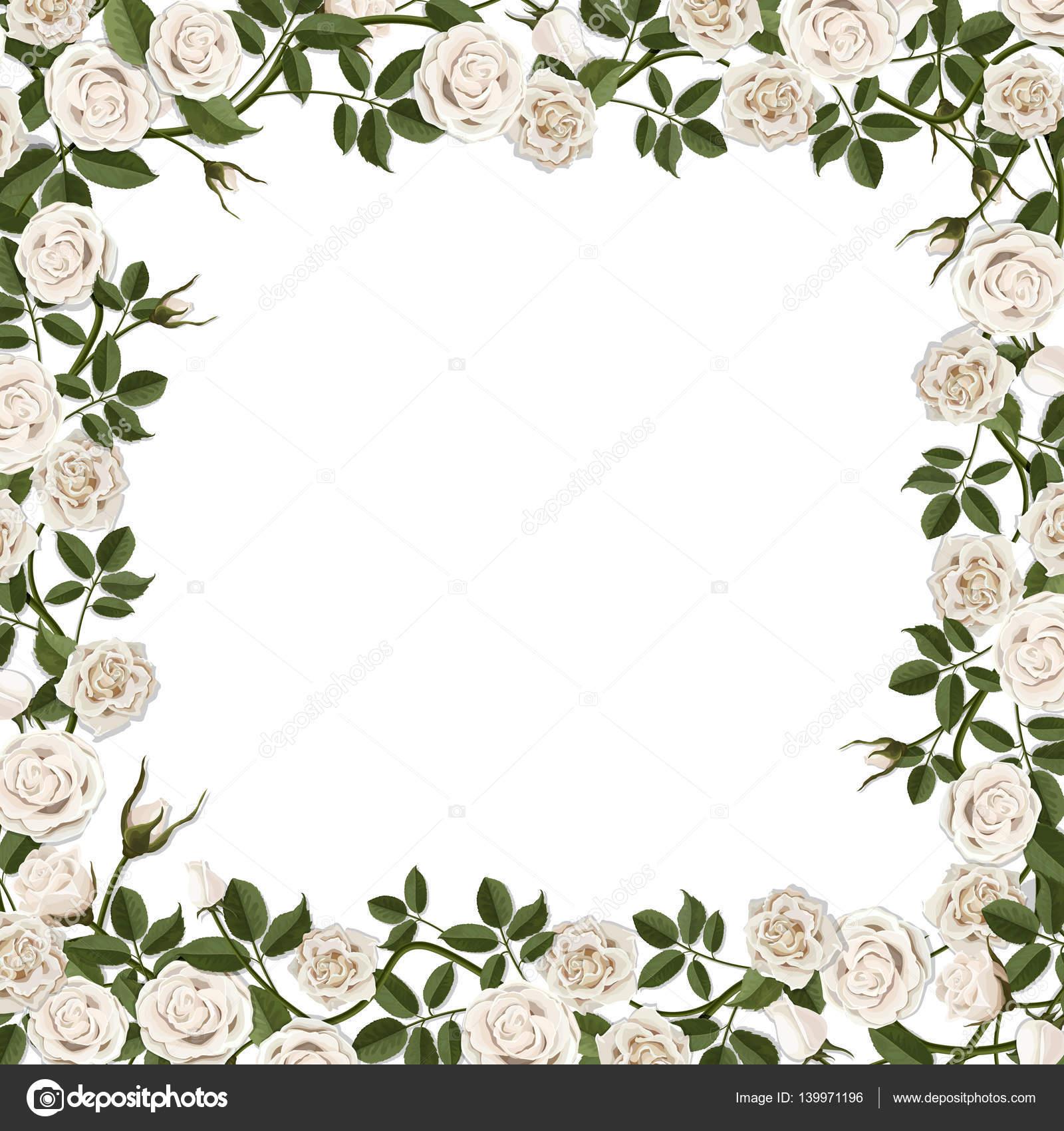 frame of blossom white rose flowers — Stock Vector © belikovand ...