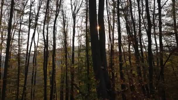 V horském lese na podzim