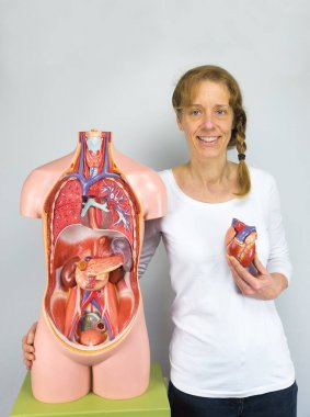 Woman showing heart model and torso