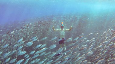 Man swims between million fishes or bait ball