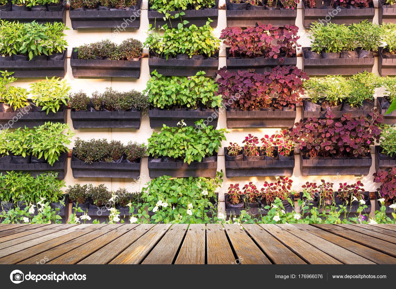 Suspension Pour Plantes D Intérieur plante d'intérieur en pot de suspension — photographie