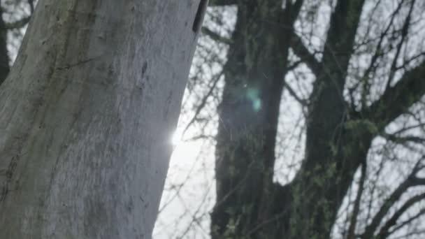 Közepes hosszú alacsony szög sekély mélységben mező követés lövés felfedi a reggeli napfény mögött egy merész fa törzse, ragyogó keresztül egy pókháló, lencse fényfolt létrehozása.
