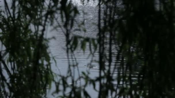 Středně dlouho mělká Hloubka pole sledování snímku šumivé odrazu slunečního světla v tekoucí vodě rybník nebo jezero, na pozadí siluetu vrbové větve stromu.