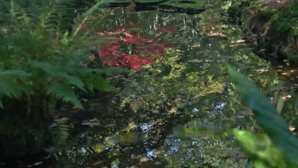 Středně široký vysoký úhel hloubkou pole sledování snímku reflexe červené, žluté a zelené barevné stromy v rybníce spadaného listí v japonské zahradě během slunečného dne na začátku podzimu