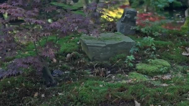 Středně dlouho mělká Hloubka pole sledování snímku slunečního světla svítí na malé mladý japonský javor a balvany ležící na mechu blízko klidné jezírko v japonské zahradě během slunečného dne na začátku podzimu