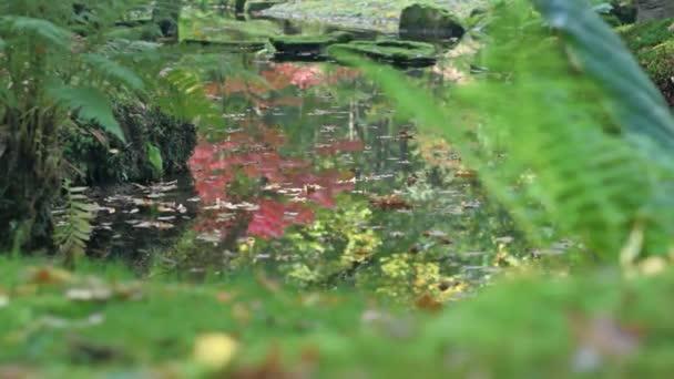 Středně dlouho mělká Hloubka pole sledování snímku z listy plovoucí a pádu v jezírko v japonské zahradě během slunečného dne na začátku podzimu