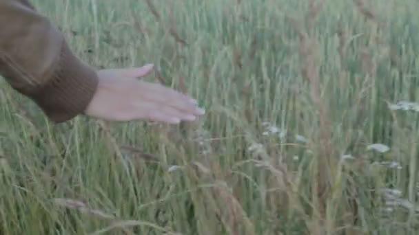 Střední kapesní mělká Hloubka pole zpomalený záběr ženské ruky dotýká dlouhá tráva, zatímco ona chodí na louce při západu slunce
