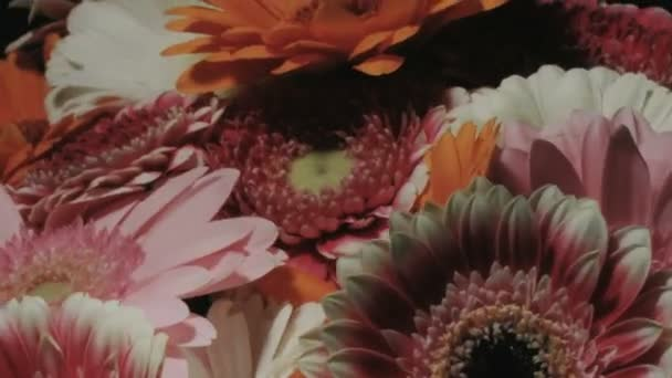 Medium close up motion time lapse shot circling around different colors gerbera daisy flowers in a colorful bouquet while blooming and dying.