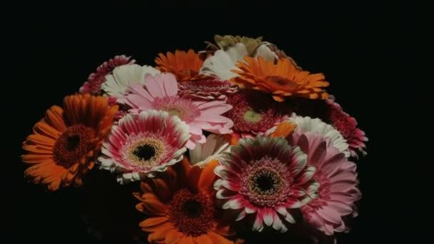 Střední pohyb časová prodleva zastřelil krouží kolem barevné banda různých barevný gerbera sedmikráska květiny kvetou a umírají ve skleněné váze na černém pozadí