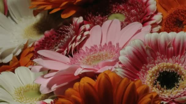 Medium close up motion time lapse shot of a pink gerbera daisy in a colorful flower bouquet.