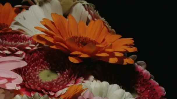 Střední blízkosti se pohybu časová prodleva zastřelil krouží kolem barevné kytice různých barevný gerbera sedmikráska se zaměřením na oranžový současně kvetoucí a umírání
