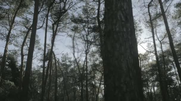 Středně široké kapesní malou hloubku pole Posun střílel uprostřed vysoký Les borovic odhaluje inspirativní sluníčko nad lesy