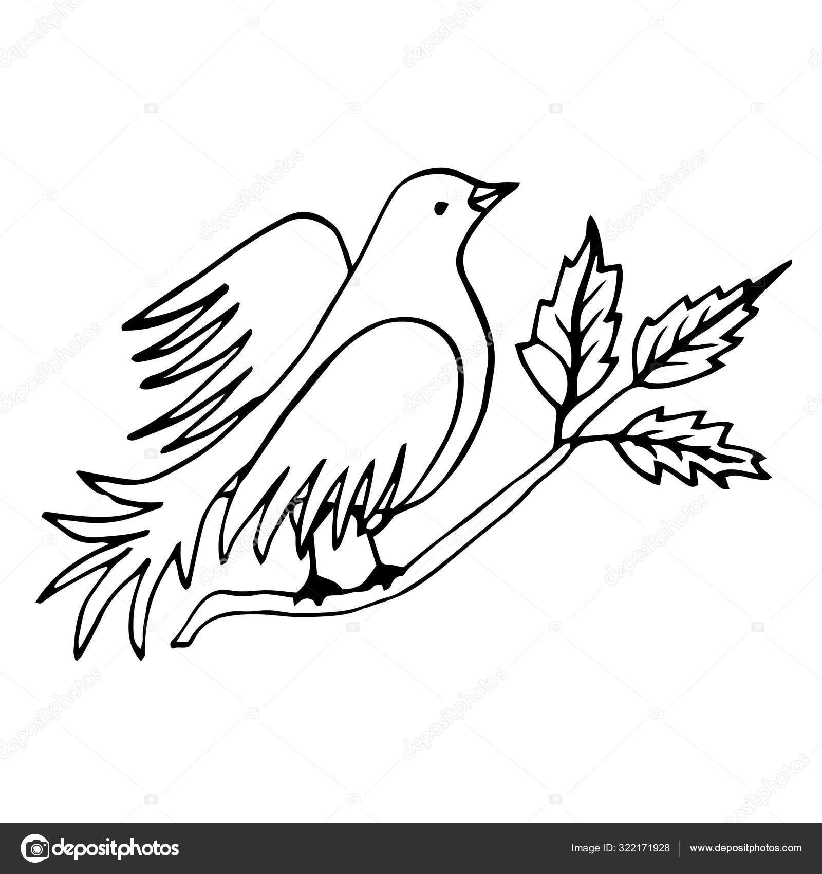 Vector Line Drawing Bird Sitting At Tree Branch With Leaves Sketch Of Dove Symbol Of Freedom Vector Image By C Alenasas Vector Stock 322171928