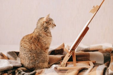 Domestic cat looking at picture on canvas easel indoor.