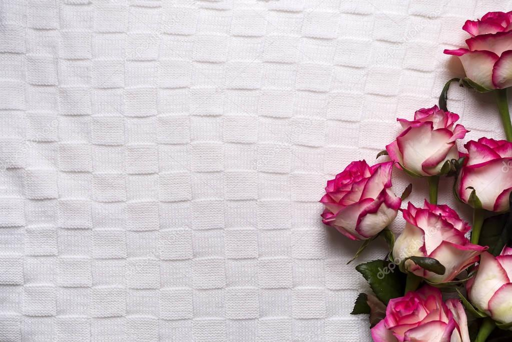 Roses frame on white background
