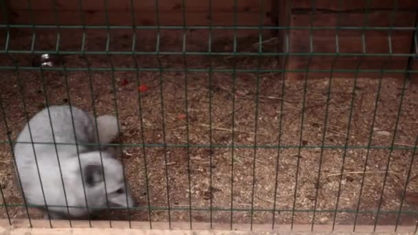 Arctic fox in a cage runs animal protection.A little arctic fox runs in a cage. Help the animals