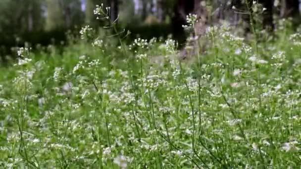 Zelená tráva a květiny se houpají ve větru. louka, příroda, flóra, jaro, vegetace, zázemí s přírodou