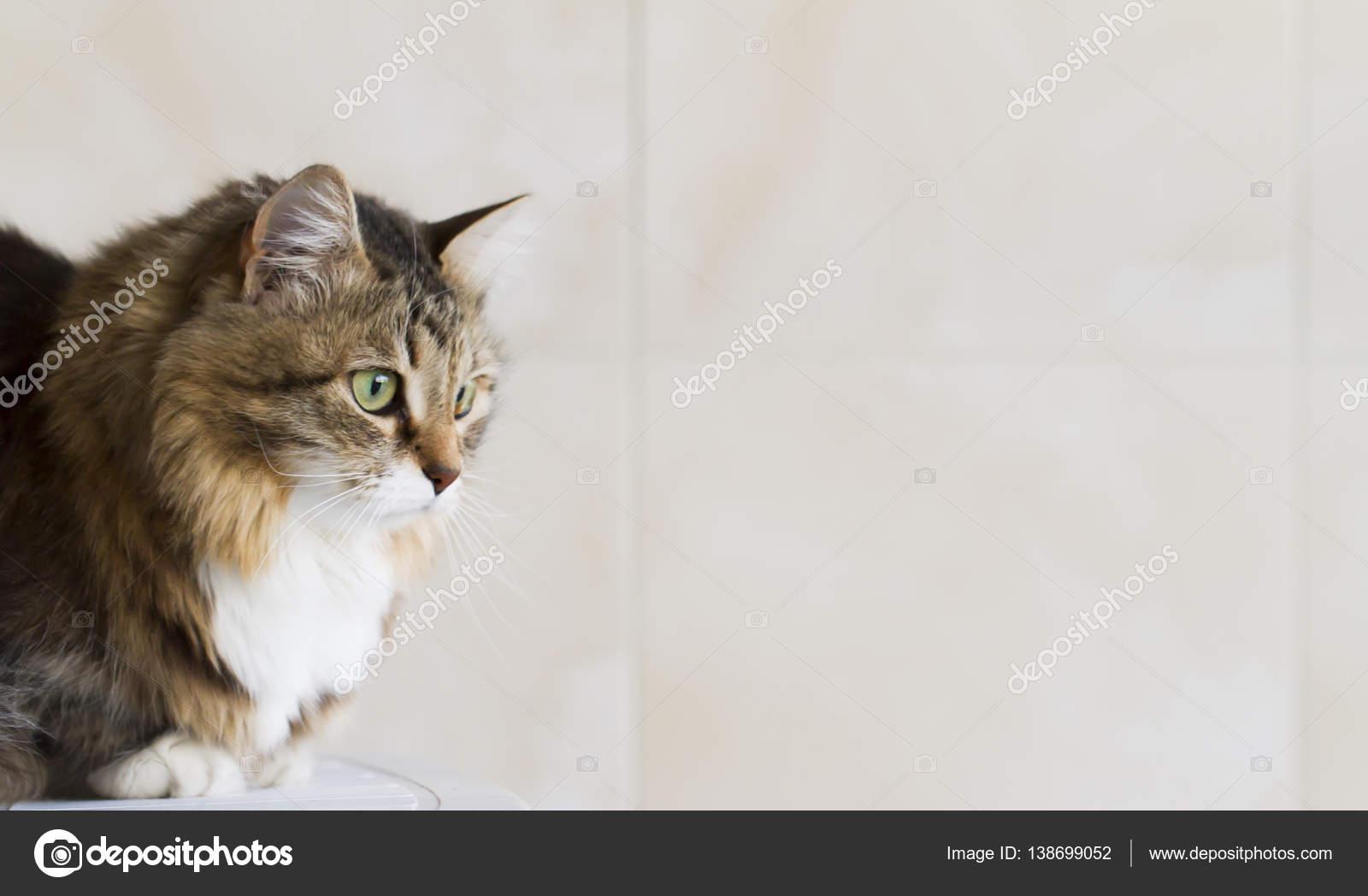 sladká kočička pic