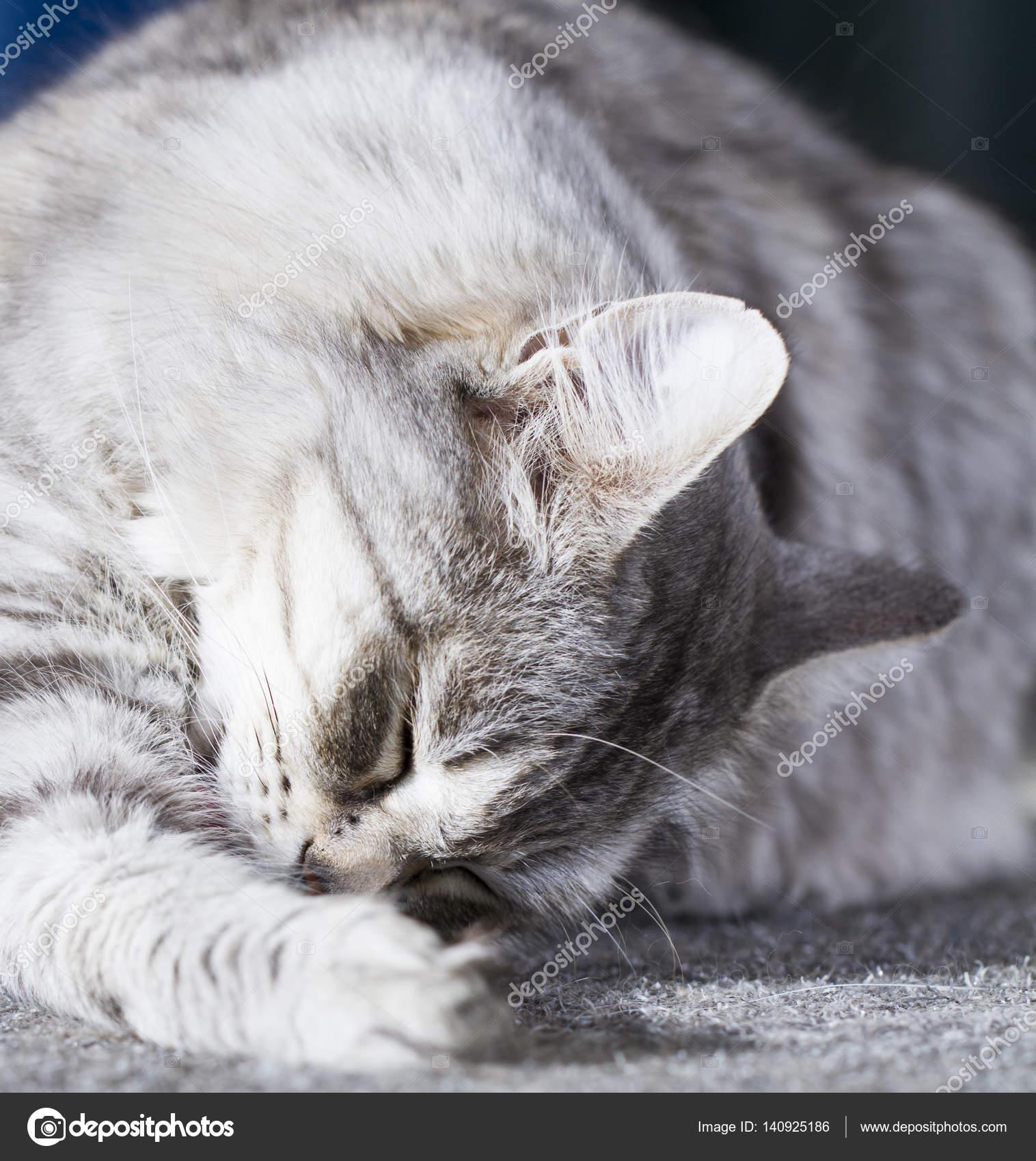 kočička lízat obrázky