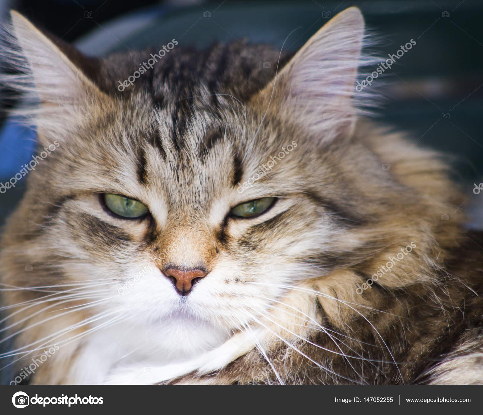 Legrační Kočky, Roztomilá Zvířecí Miminka, Srandovní Fotky Zvířat, Pěkné Kočky, Krásné Kočky, Videa S Legračními Zvířátky, Roztomilá Zvířátka, Rozkošná.