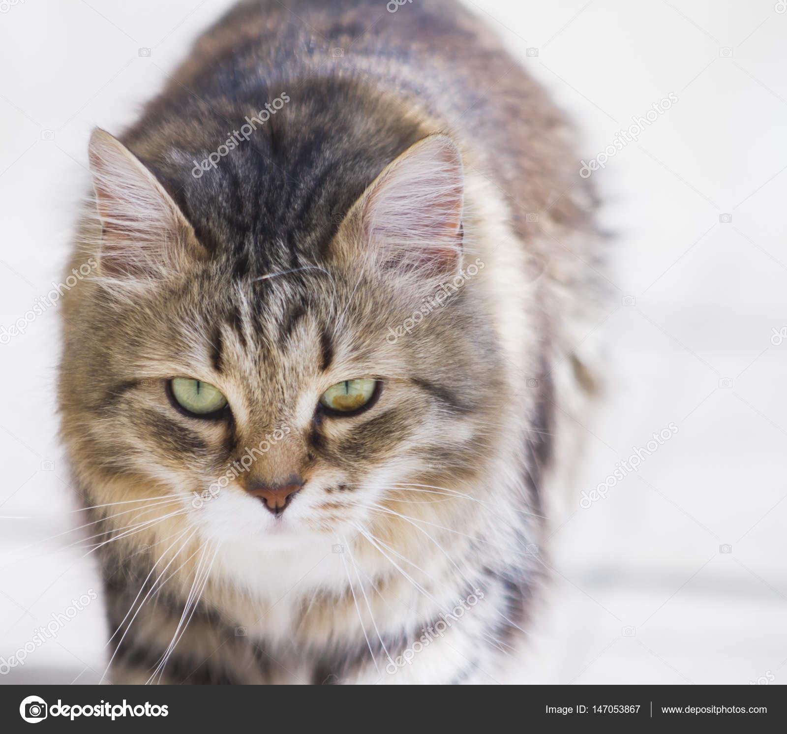 pěkně kočičí obrázky sledovat zdarma černé velké kořist porno