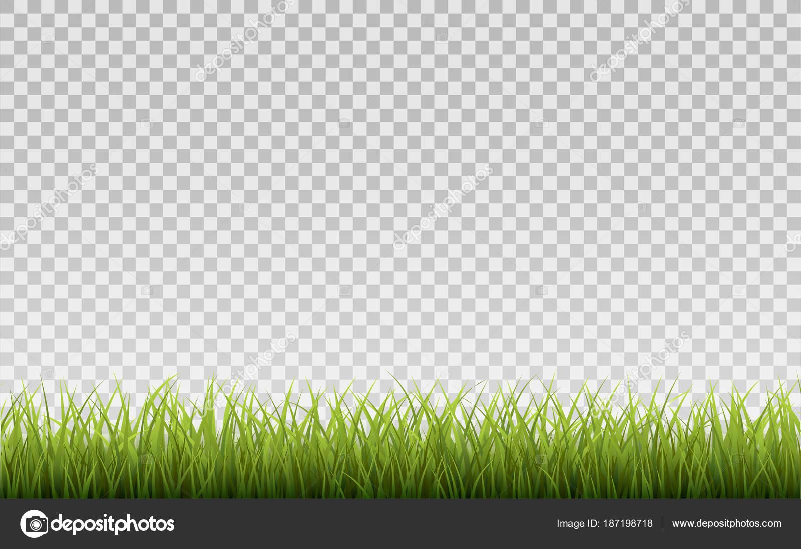 grass transparent background. Green Grass Border, Isolated On Transparent Background, With Gradient Mesh  \u2014 Stock Vector Grass Transparent Background R