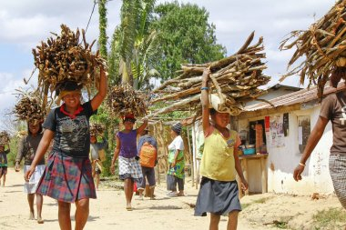 Poor malagasy people carrying branches on heads - poverty
