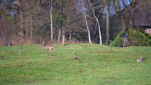 stádo jelenů je na poli v přírodě
