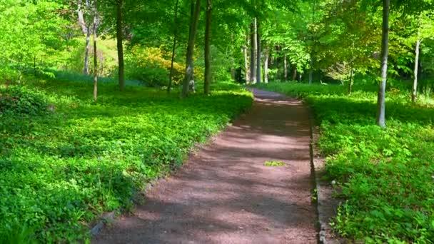 krásný starý park svítí na slunci, stromy a keře září v celé své zelené nádheře a je posetý turistickými stezkami pro pěší v parku