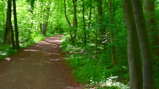 a beautiful old park shines in the sunshine, the trees and bushes shine in all their green splendor and is littered with hiking trails for pedestrians in the park