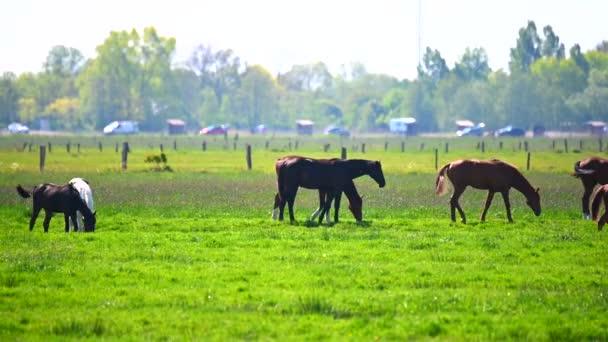 Különböző lovak legelnek a mezőn a napsütésben.