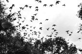 madár repül az égen