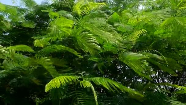 Vítr v listech tropického stromu