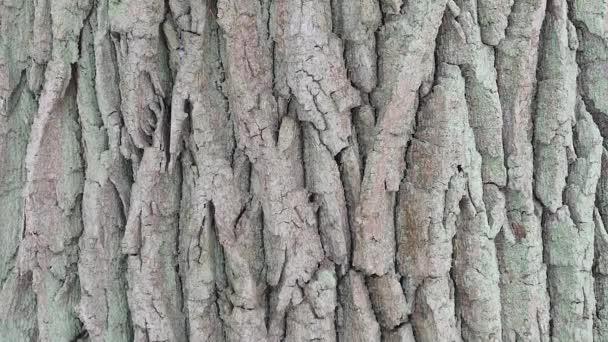 Kůra stromu makra. Pozadí