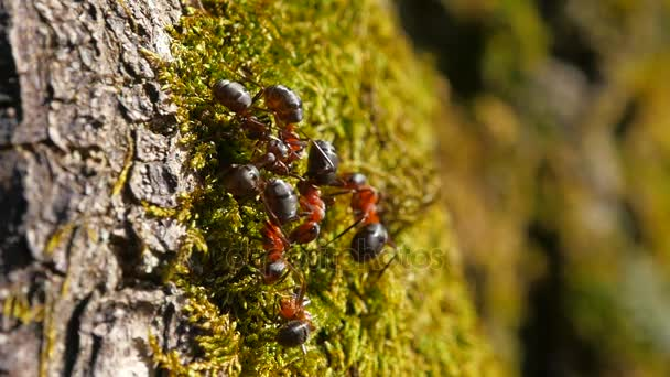 Ants on a tree trunk. macro