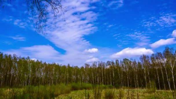Les v brzy na jaře. časová prodleva