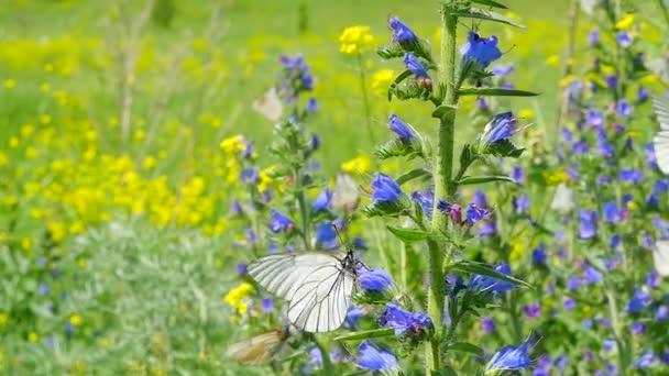 Farfalle sui fiori in un prato
