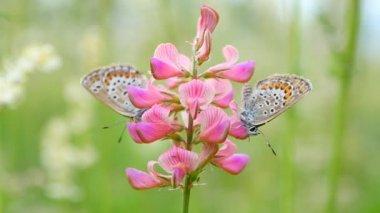 Pillangók, virágok a rét