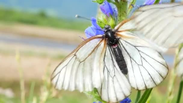 Butterflies on flowers in a meadow